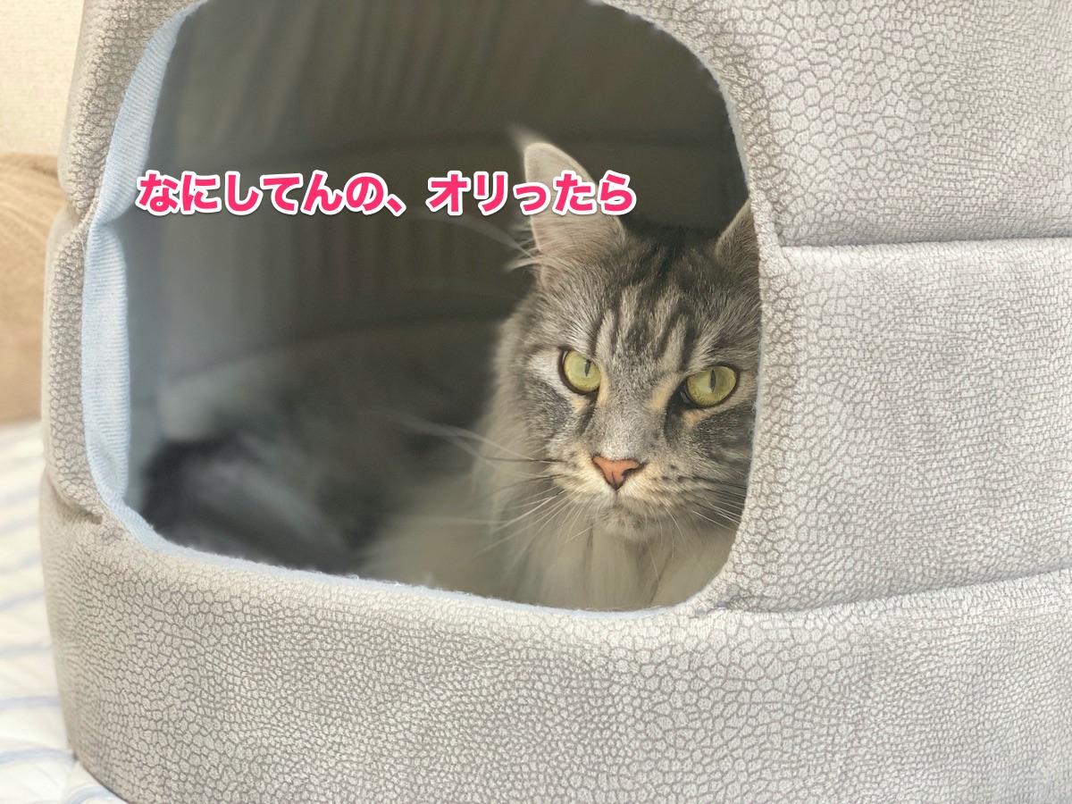 f:id:chikojirou:20200711223957j:plain