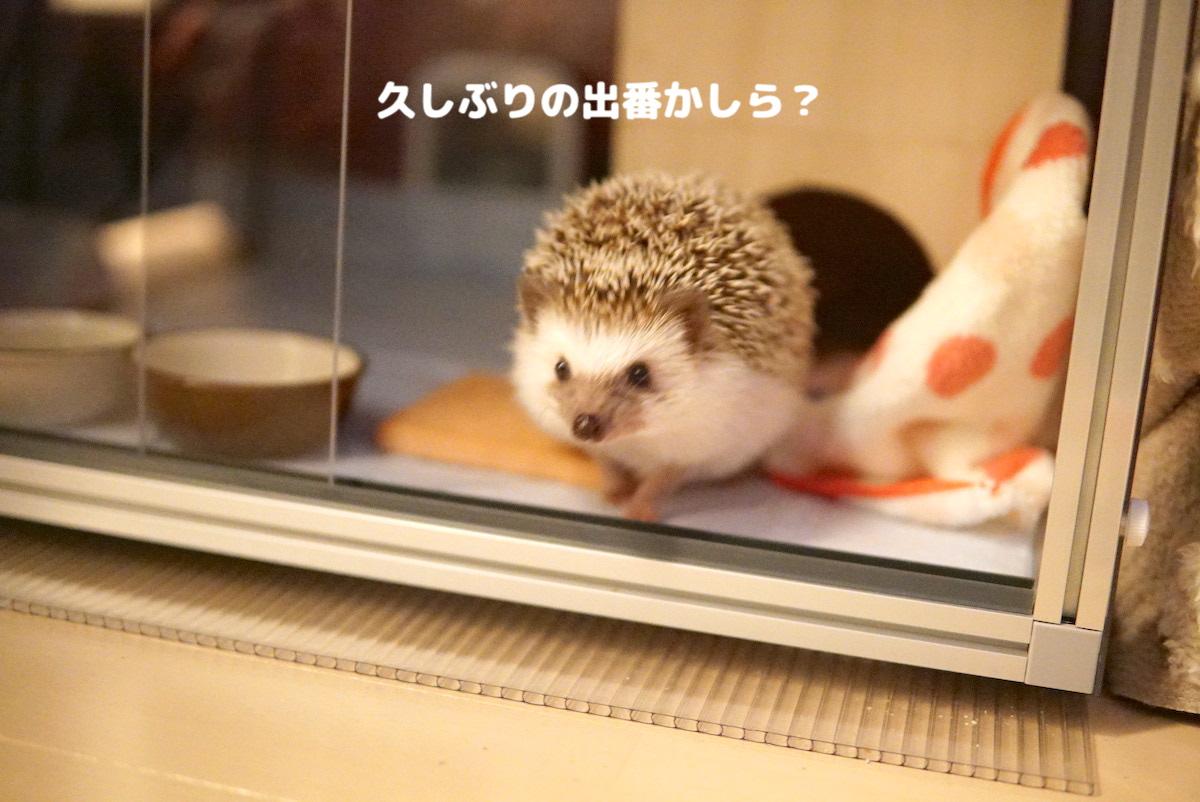 f:id:chikojirou:20200731121417j:plain