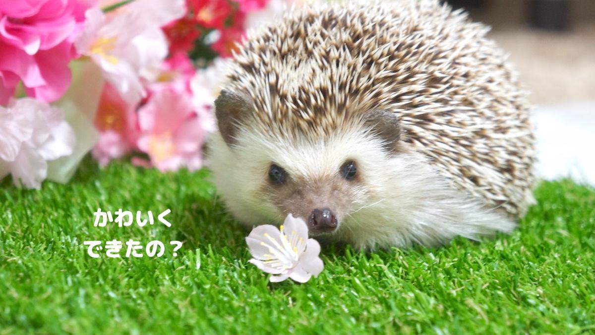 f:id:chikojirou:20200731121610j:plain