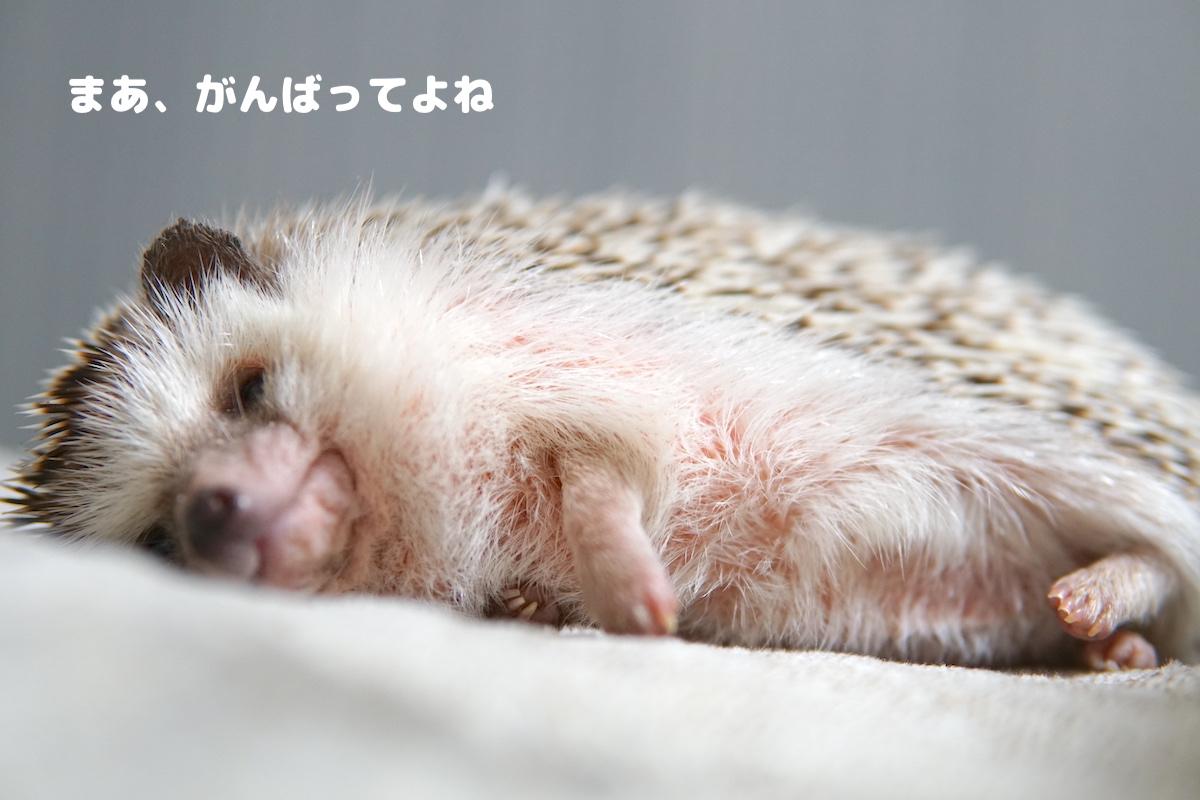 f:id:chikojirou:20200731121705j:plain