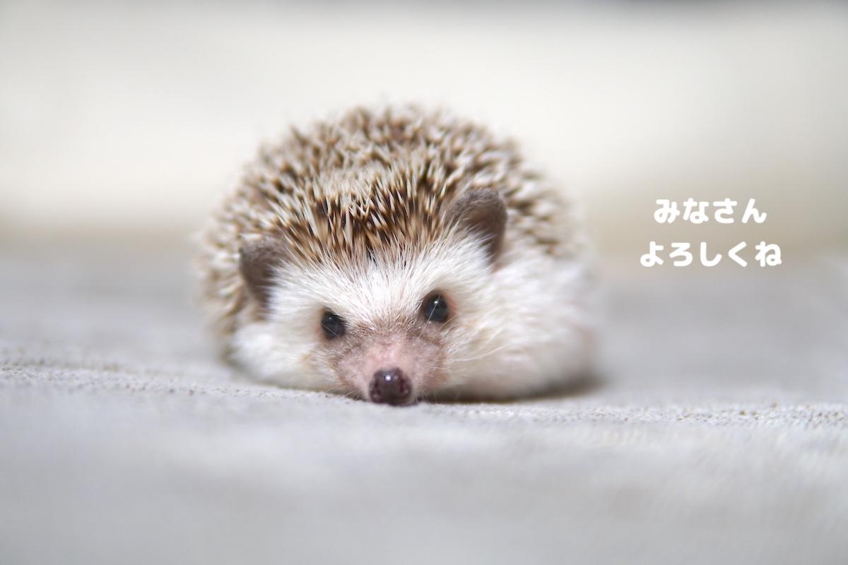 f:id:chikojirou:20200731121708j:plain