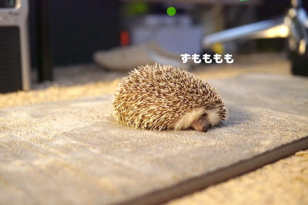 f:id:chikojirou:20200731121957j:plain