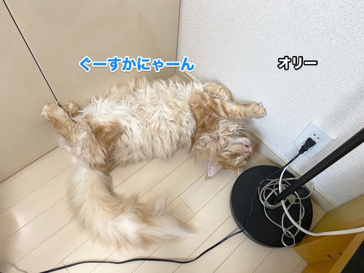 f:id:chikojirou:20200906211512j:plain