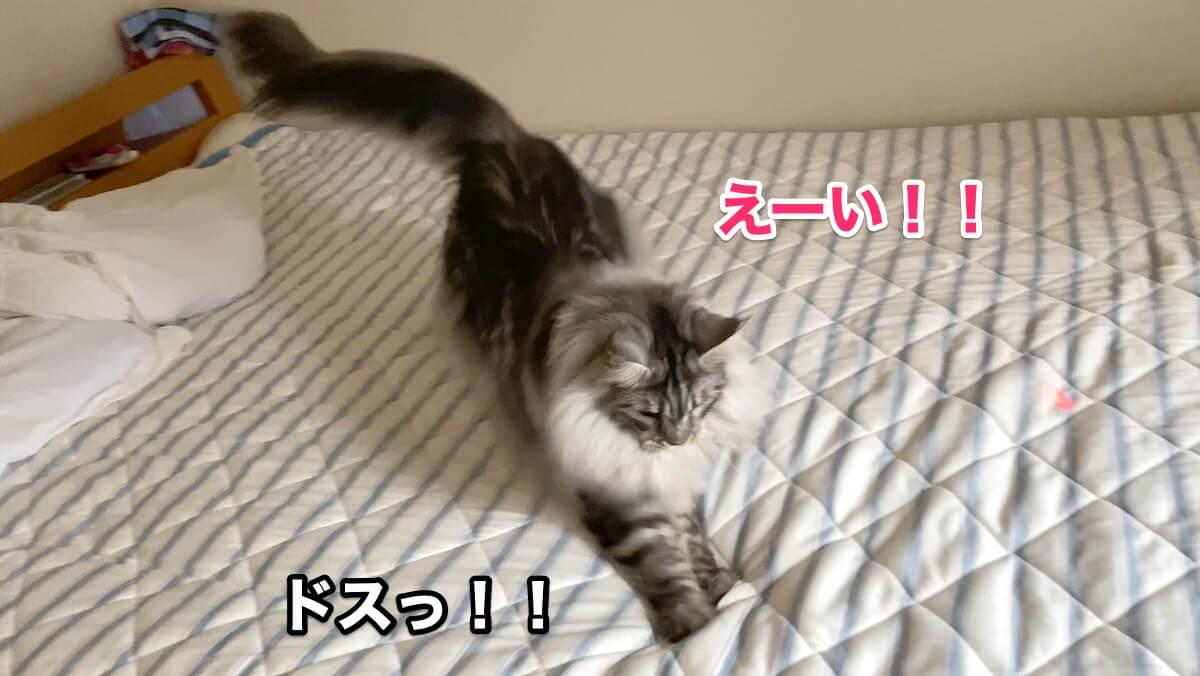 f:id:chikojirou:20200906211525j:plain
