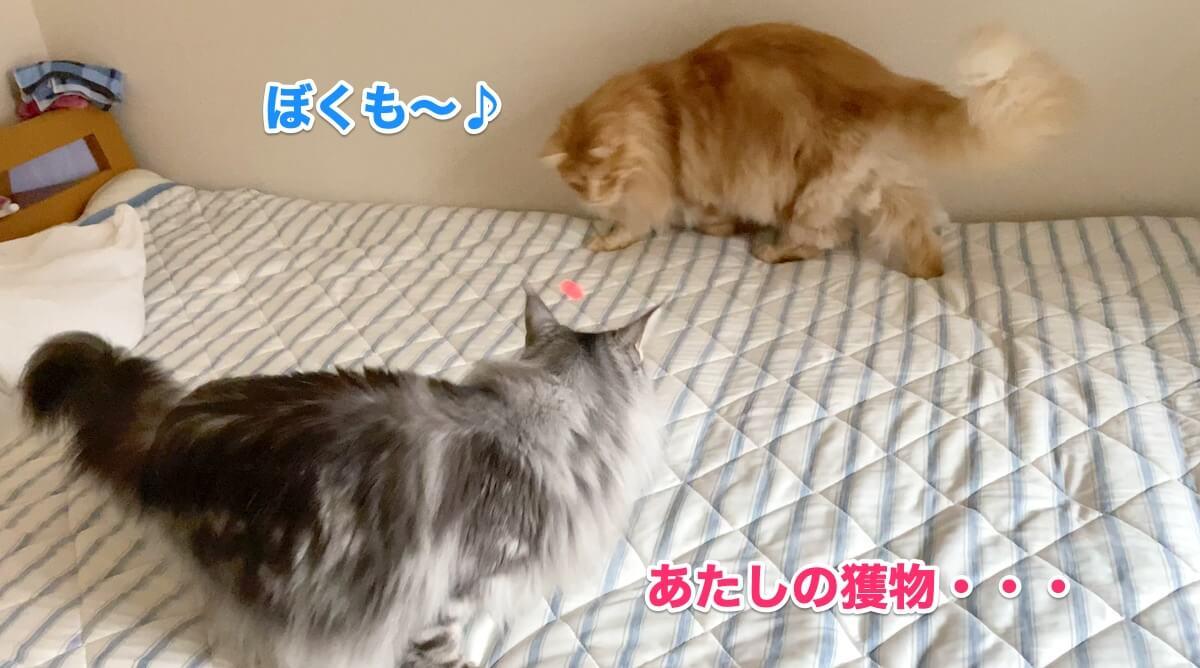 f:id:chikojirou:20200906211534j:plain