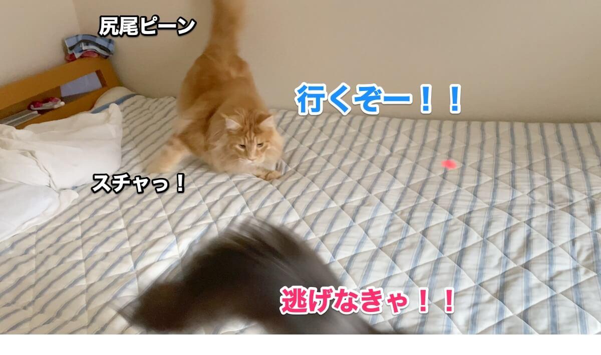 f:id:chikojirou:20200906211539j:plain