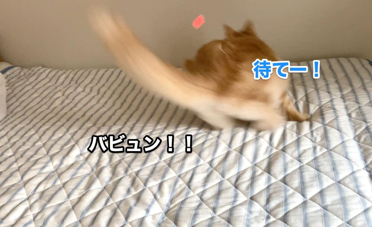 f:id:chikojirou:20200906211546j:plain