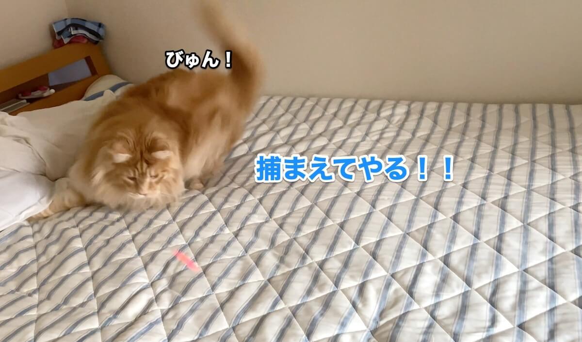 f:id:chikojirou:20200906211549j:plain