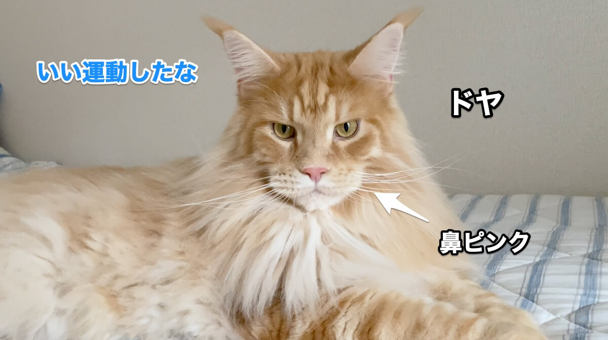 f:id:chikojirou:20200906211552j:plain