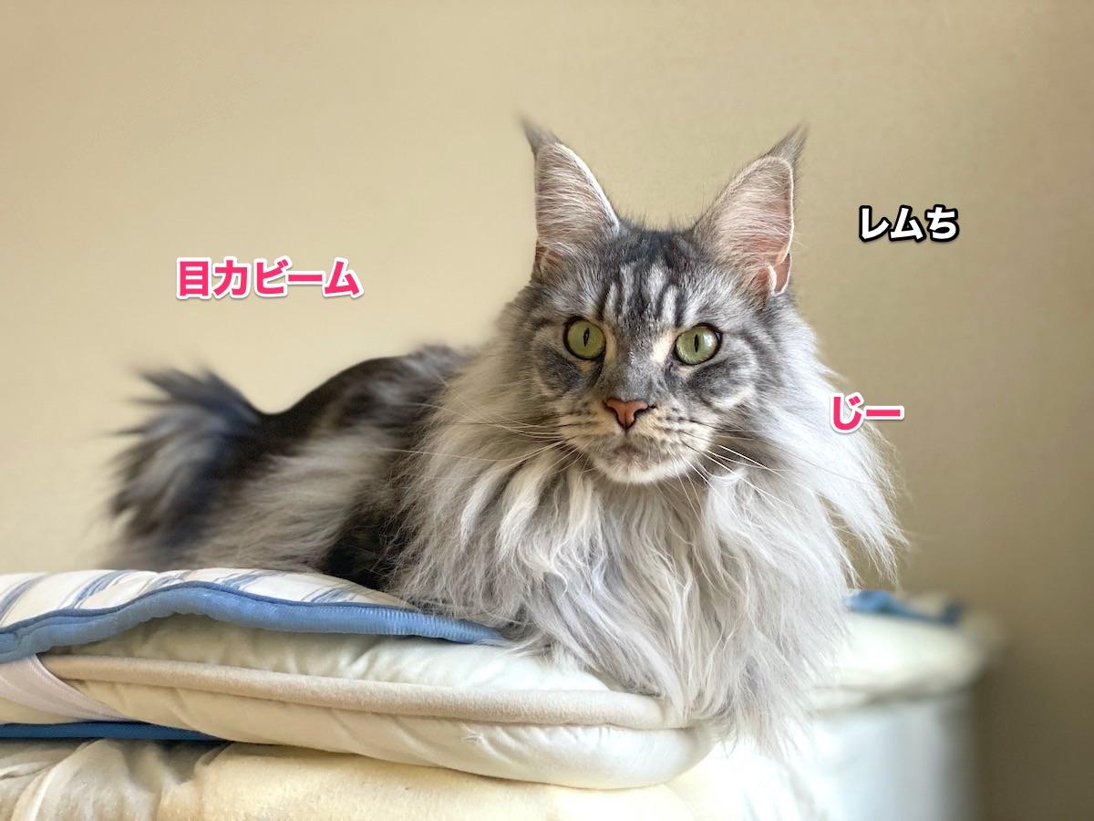f:id:chikojirou:20200913205413j:plain