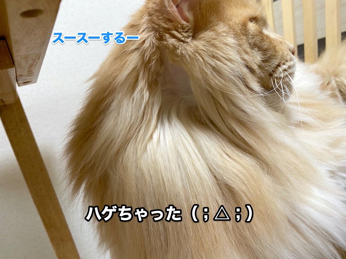 f:id:chikojirou:20200913205438j:plain