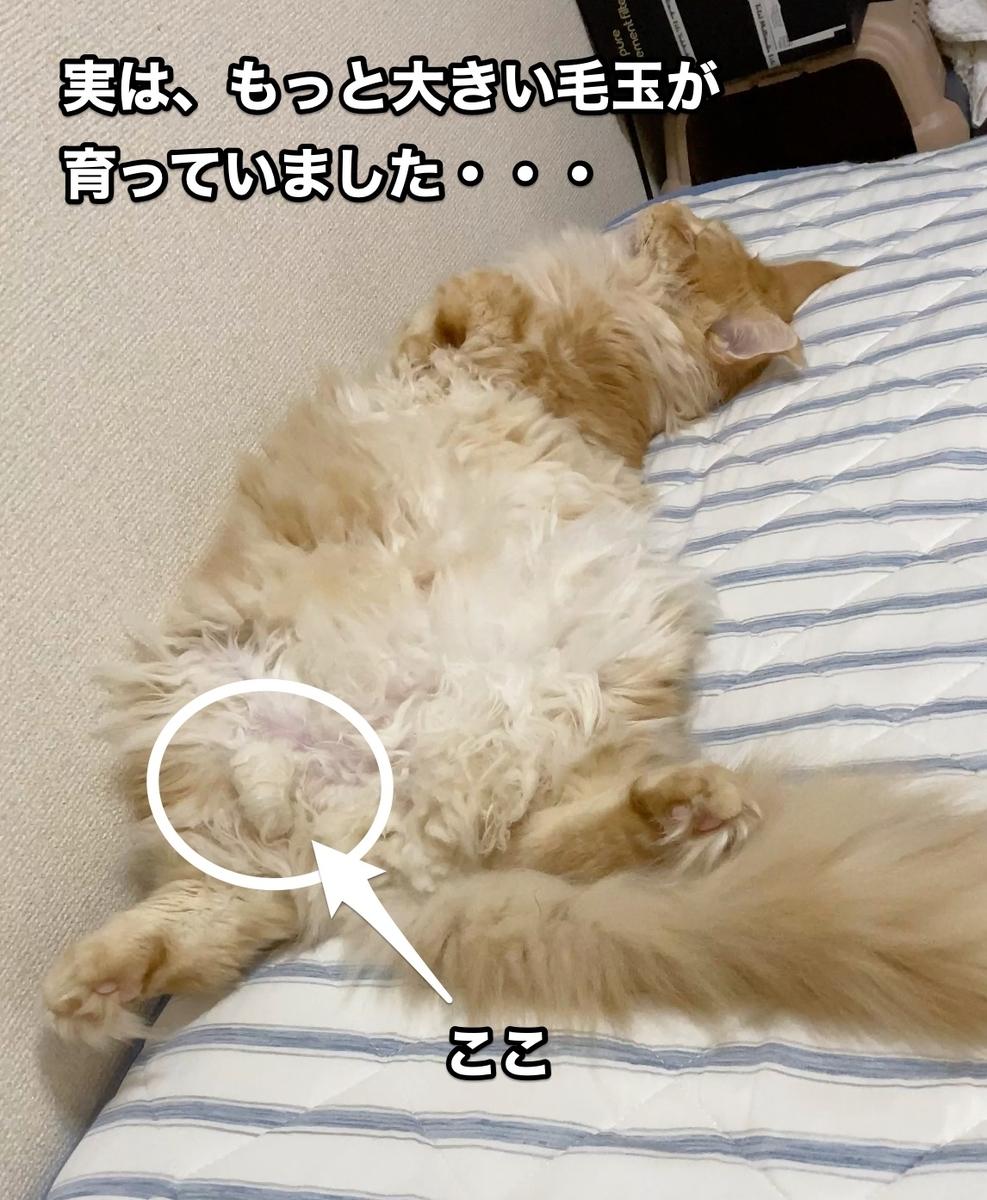f:id:chikojirou:20200913205442j:plain