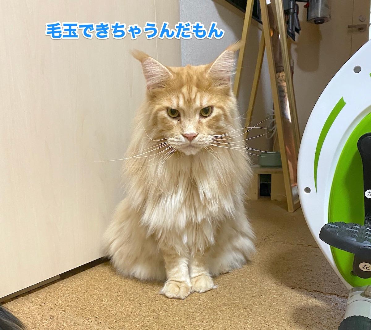 f:id:chikojirou:20200913205453j:plain