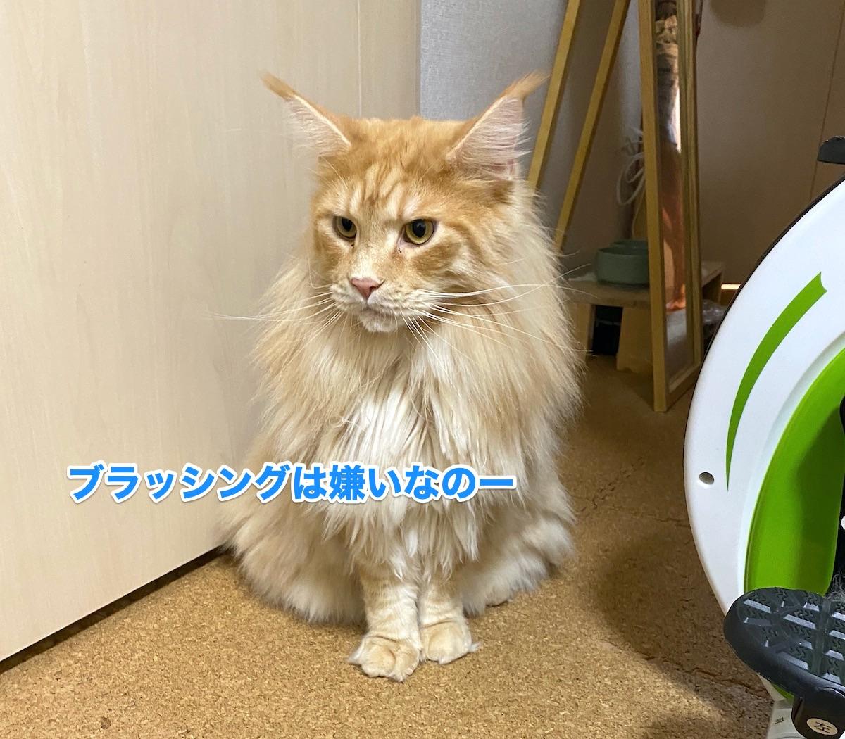 f:id:chikojirou:20200913205457j:plain