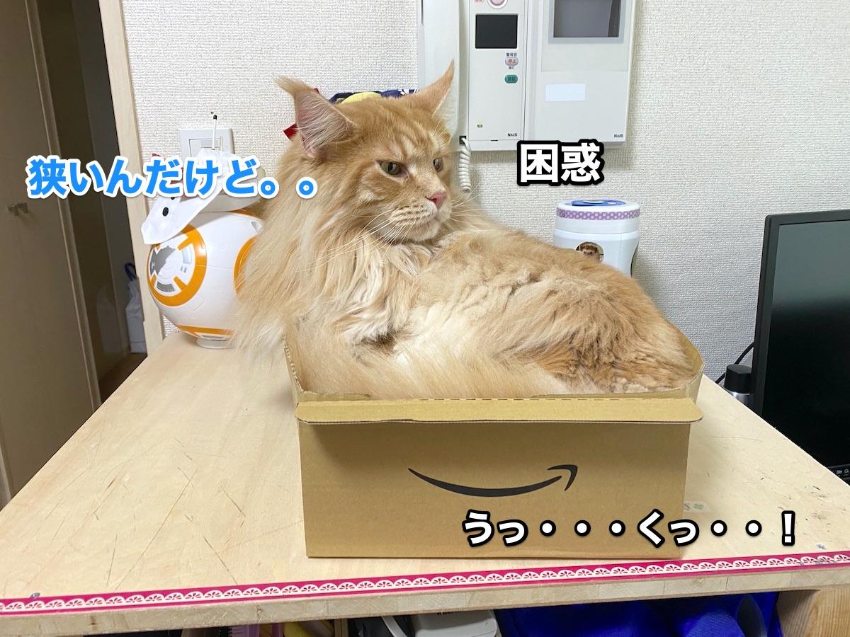 f:id:chikojirou:20200915211305j:plain