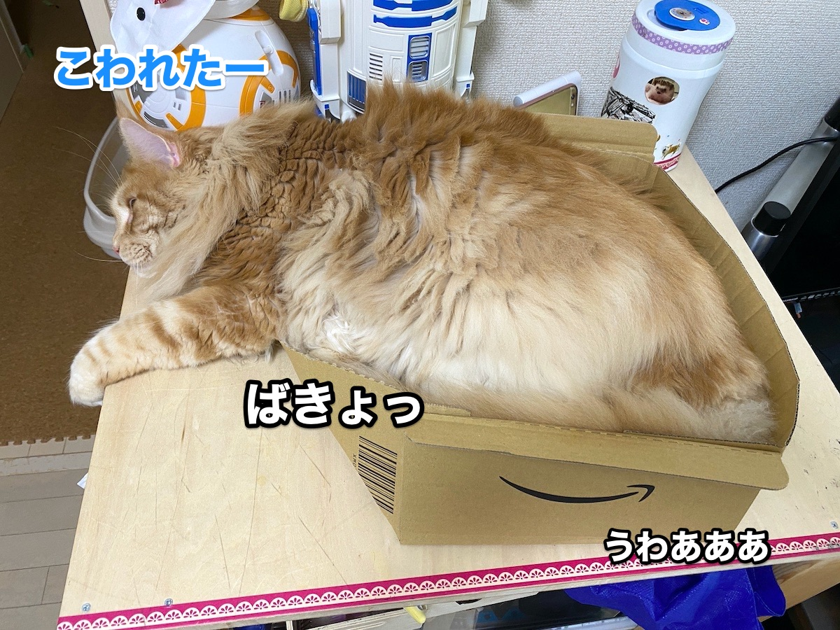 f:id:chikojirou:20200915211309j:plain