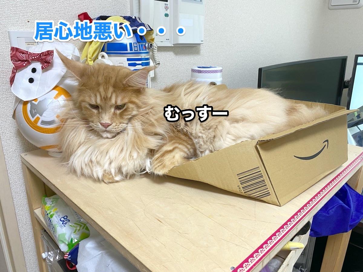 f:id:chikojirou:20200915211313j:plain
