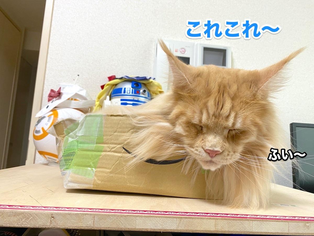 f:id:chikojirou:20200915211316j:plain