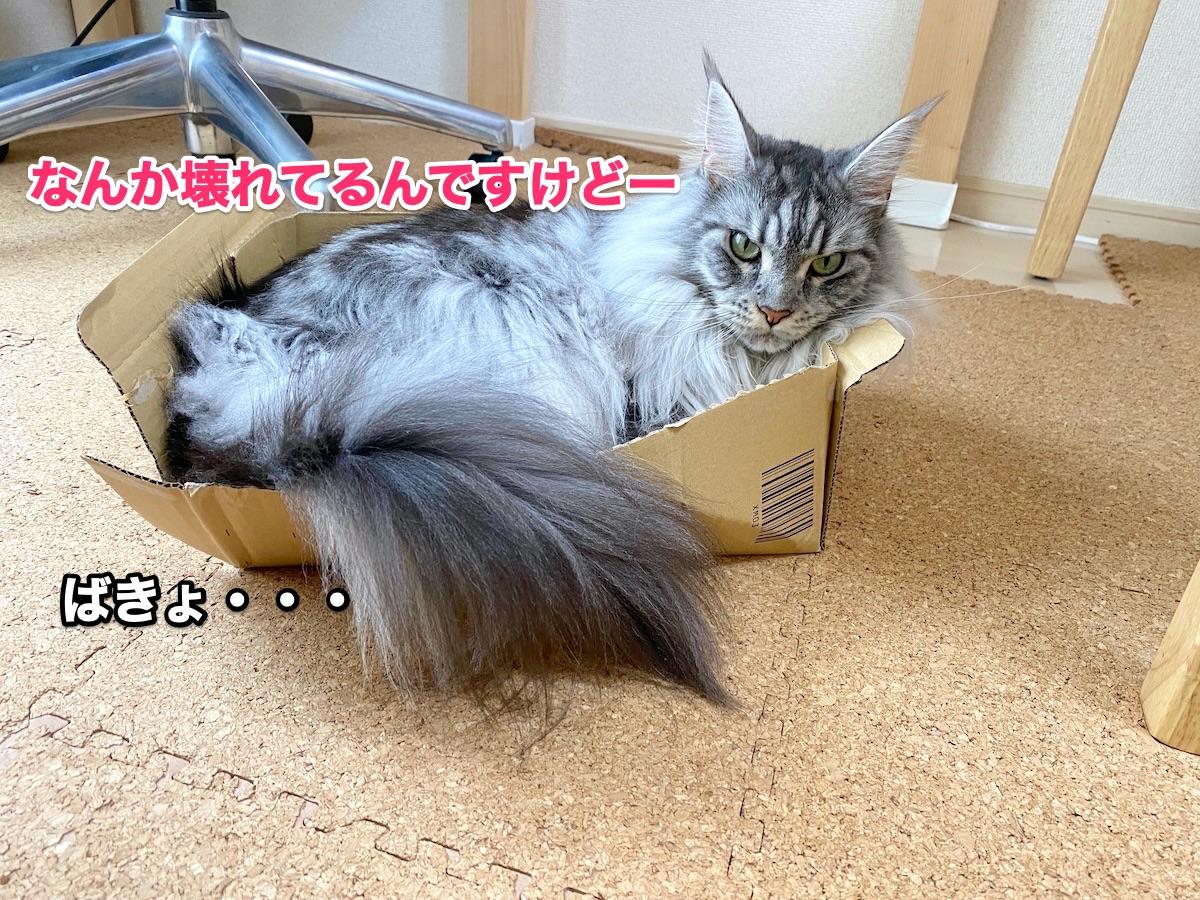 f:id:chikojirou:20200915211337j:plain
