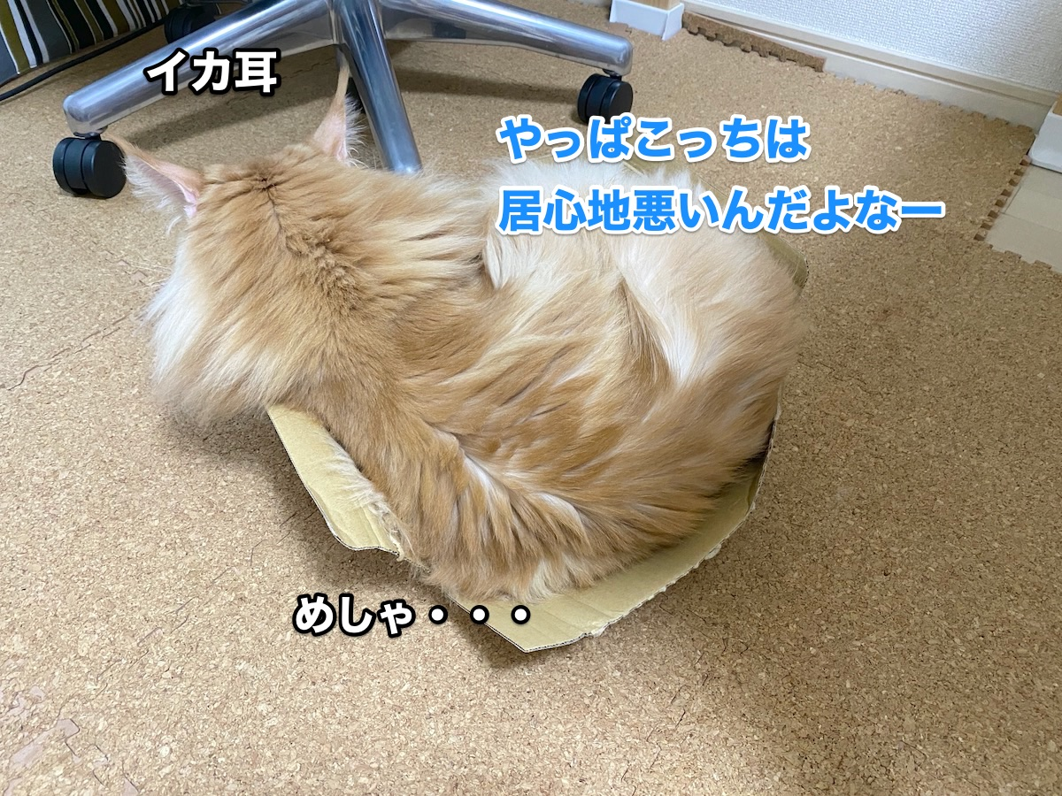 f:id:chikojirou:20200915211341j:plain