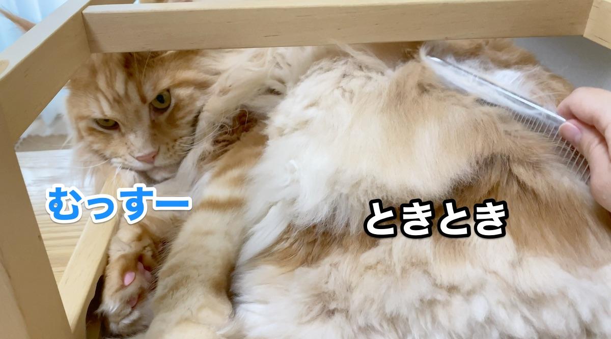 f:id:chikojirou:20200915211354j:plain