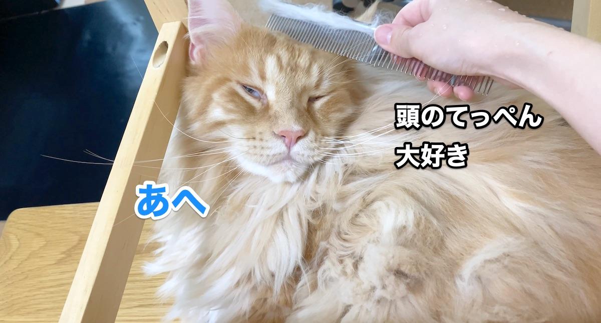 f:id:chikojirou:20200915211357j:plain
