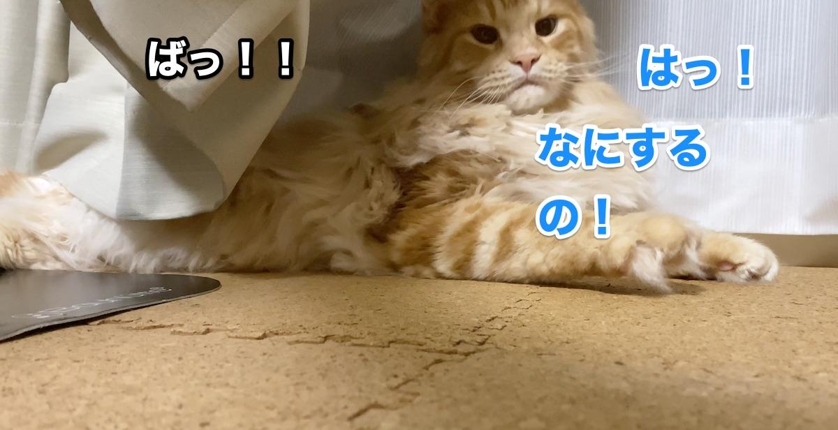 f:id:chikojirou:20200920214802j:plain