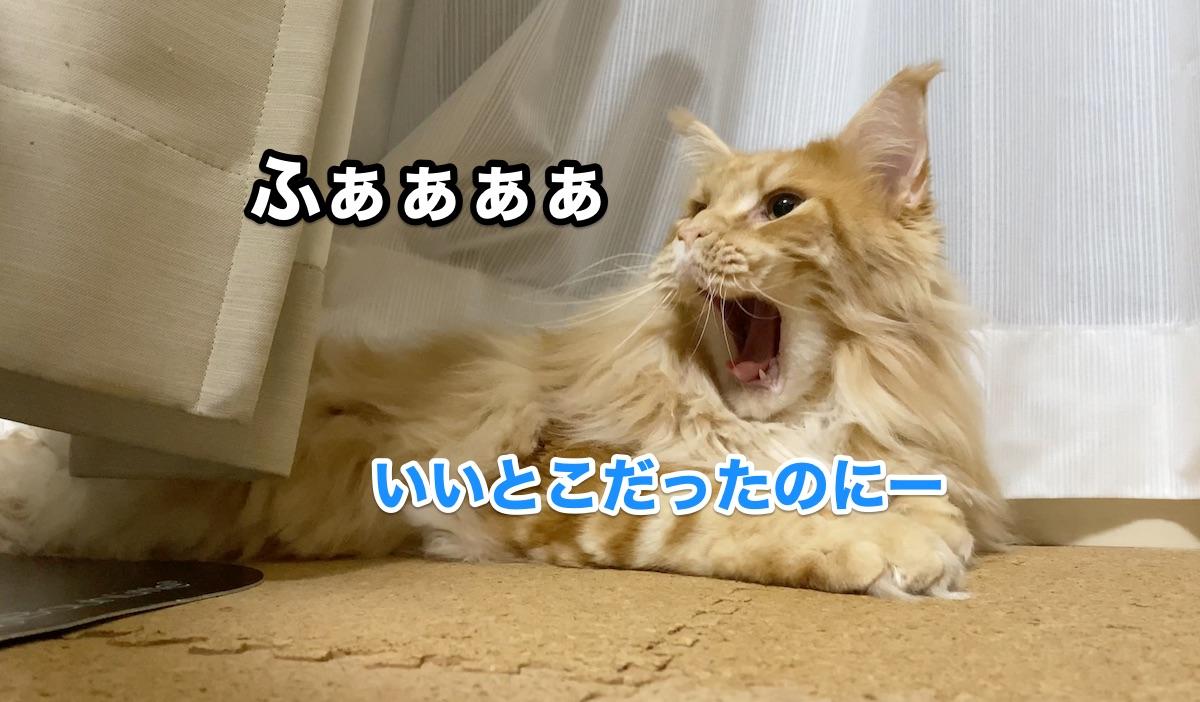 f:id:chikojirou:20200920214805j:plain