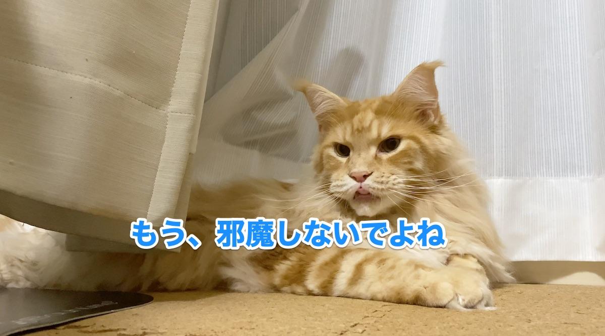 f:id:chikojirou:20200920214809j:plain