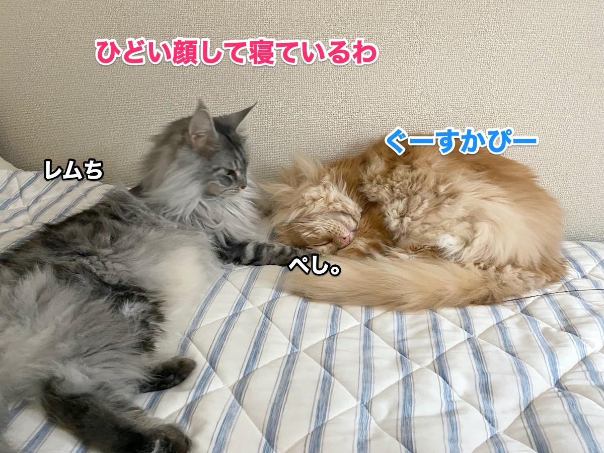 f:id:chikojirou:20200920214825j:plain