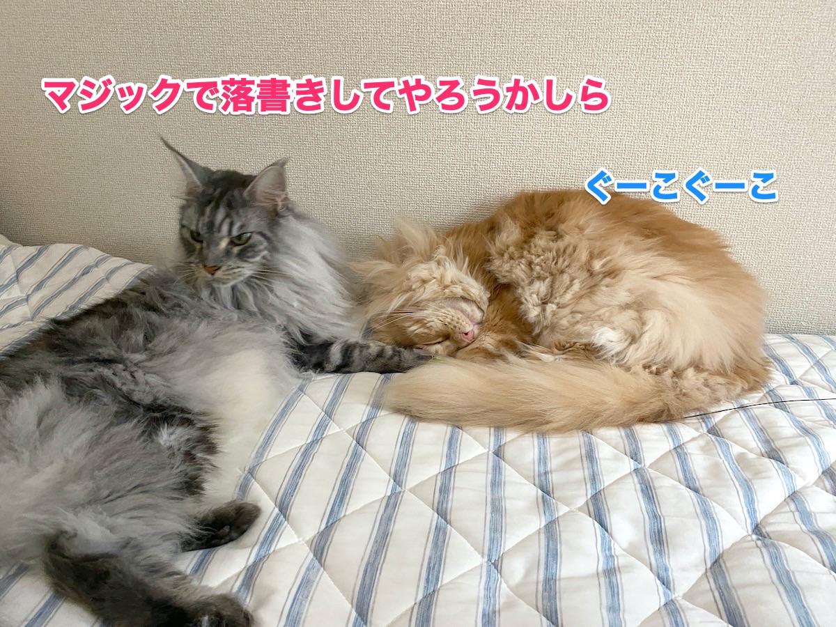 f:id:chikojirou:20200920214831j:plain