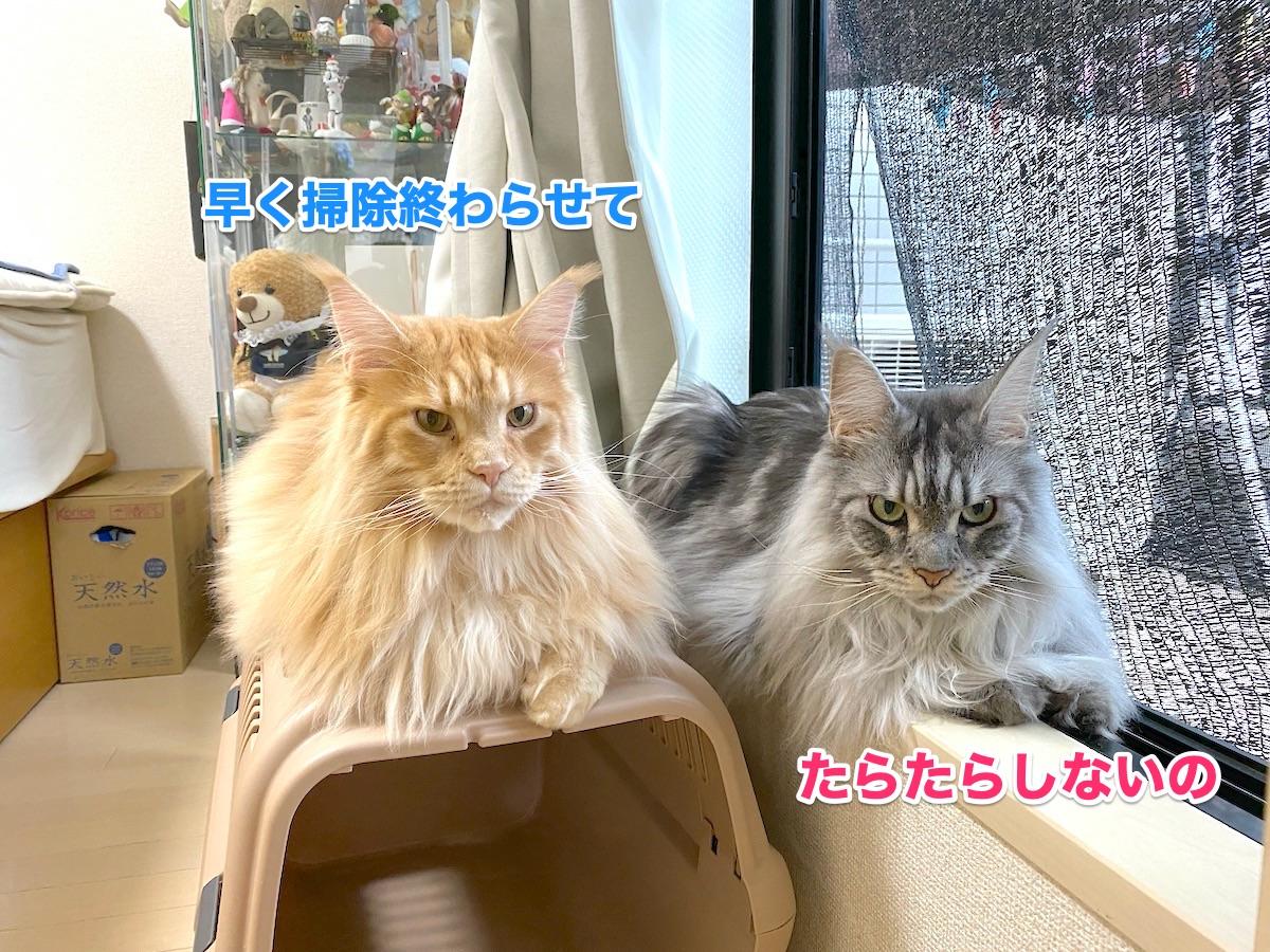 f:id:chikojirou:20200923184450j:plain