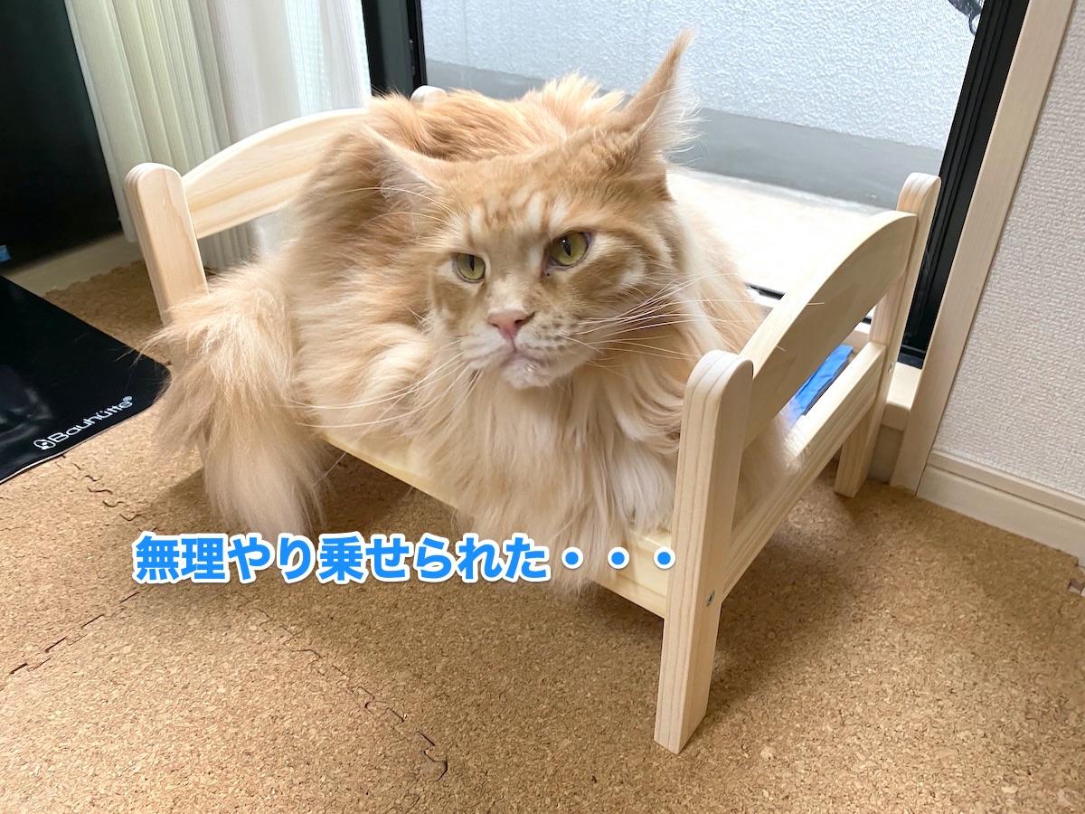 f:id:chikojirou:20200923184501j:plain