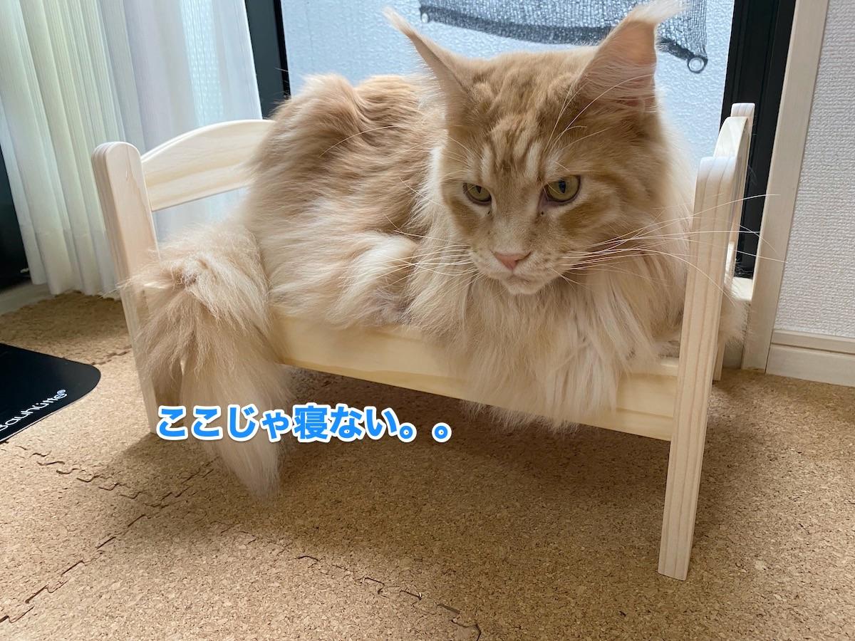 f:id:chikojirou:20200923184510j:plain