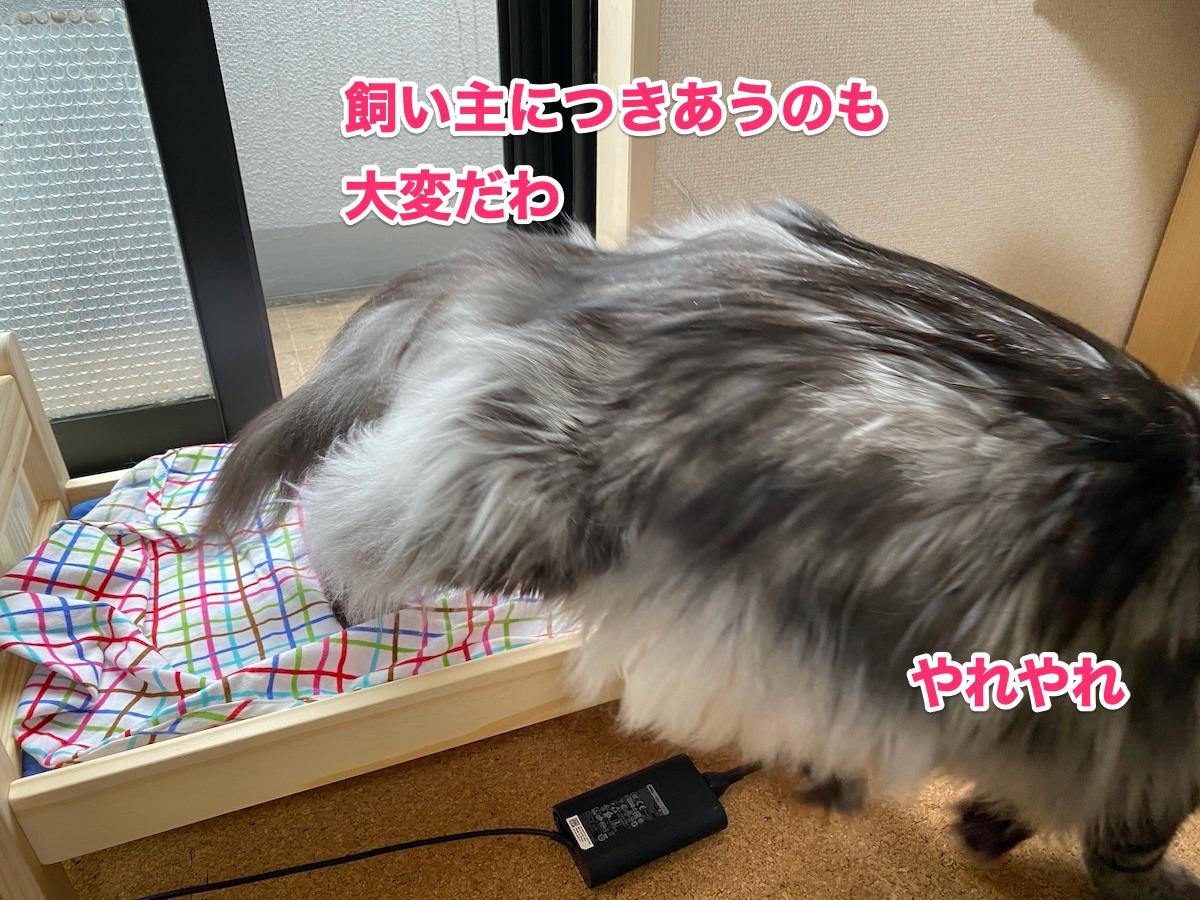f:id:chikojirou:20200923184524j:plain
