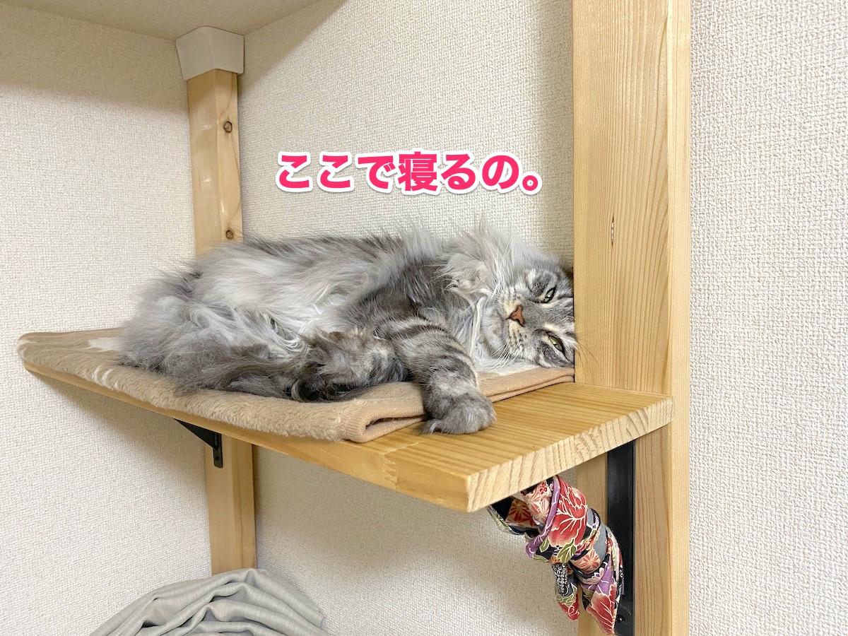 f:id:chikojirou:20200923184527j:plain