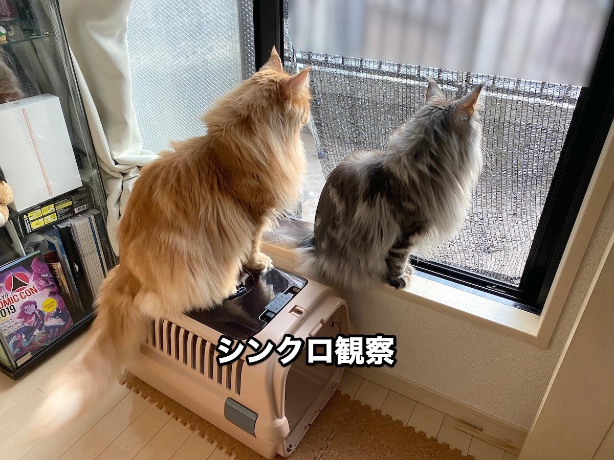 f:id:chikojirou:20201124211210j:plain