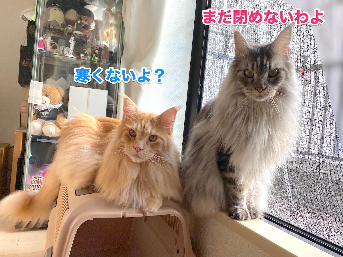 f:id:chikojirou:20201124211214j:plain
