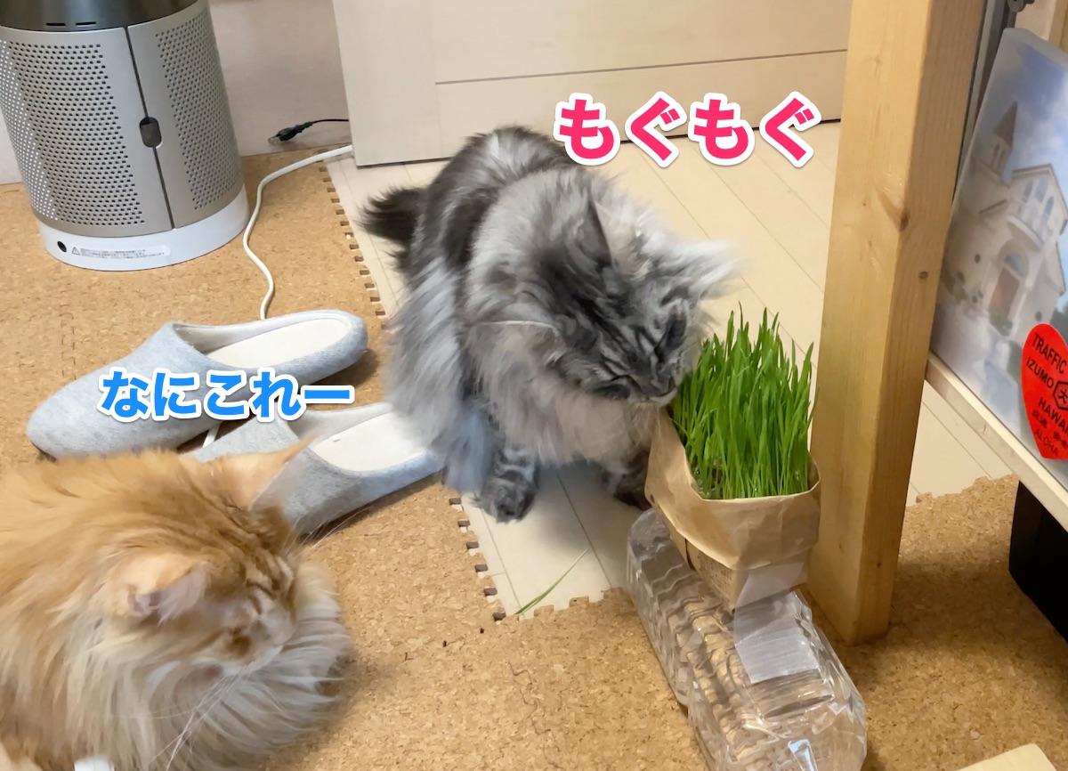 f:id:chikojirou:20201124211218j:plain