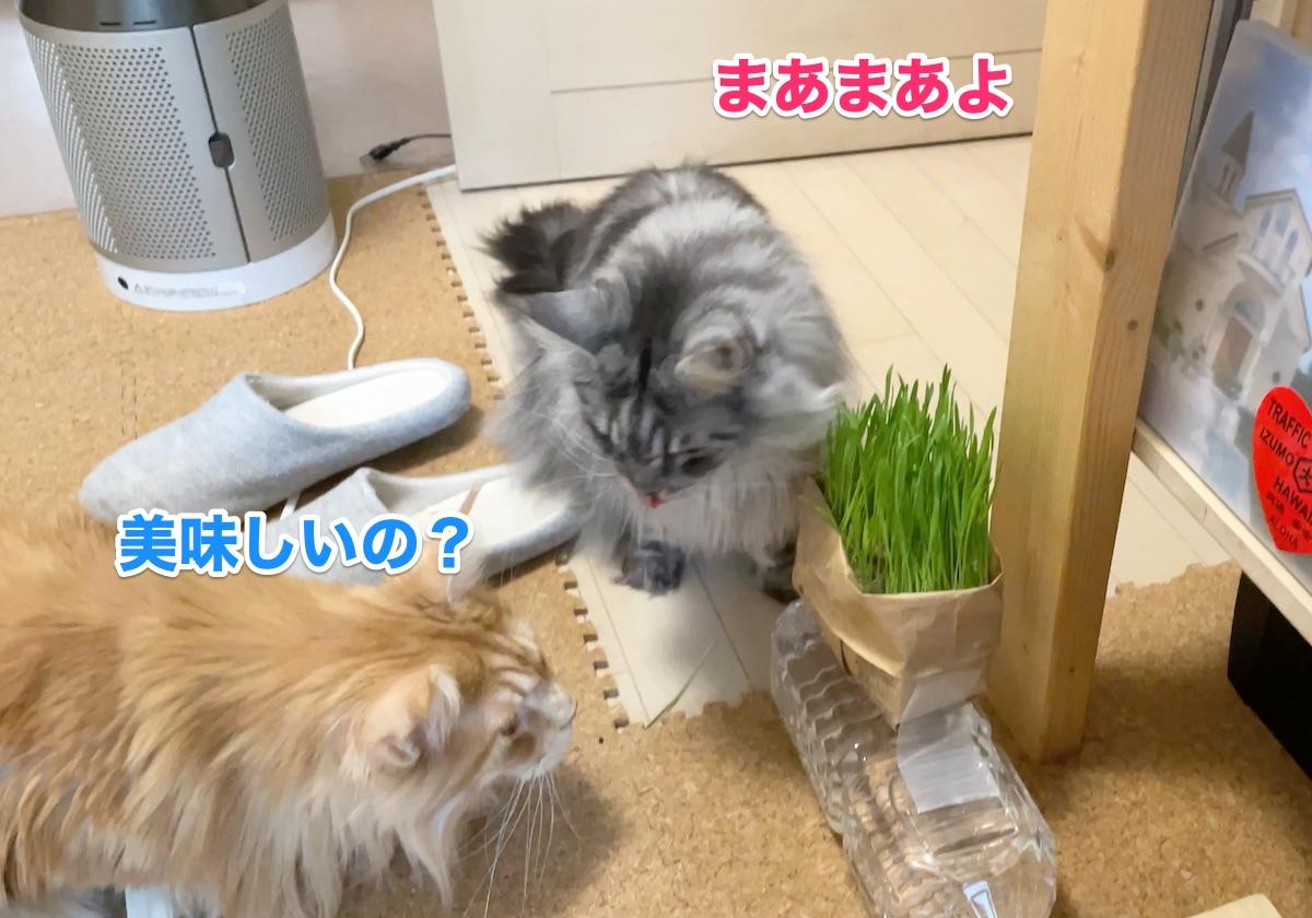 f:id:chikojirou:20201124211222j:plain