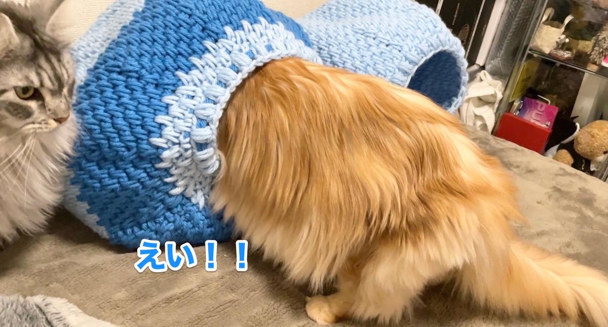 f:id:chikojirou:20201124211225j:plain