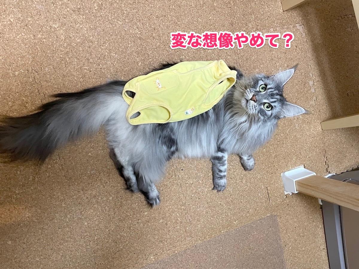 f:id:chikojirou:20201125213827j:plain