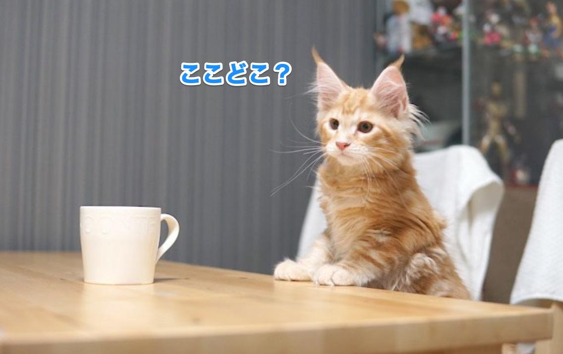f:id:chikojirou:20201125214559j:plain