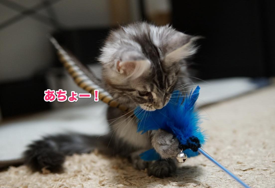f:id:chikojirou:20201125214603j:plain