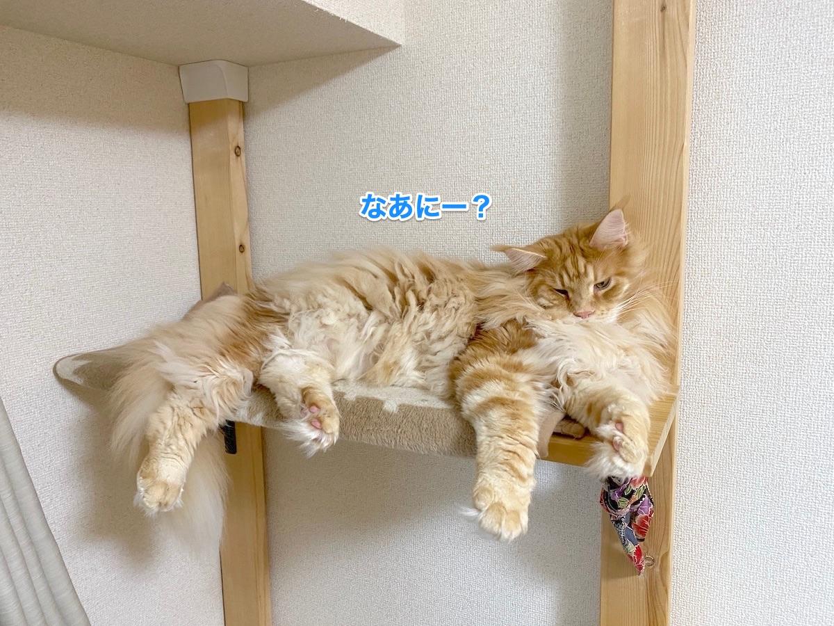 f:id:chikojirou:20201130212239j:plain