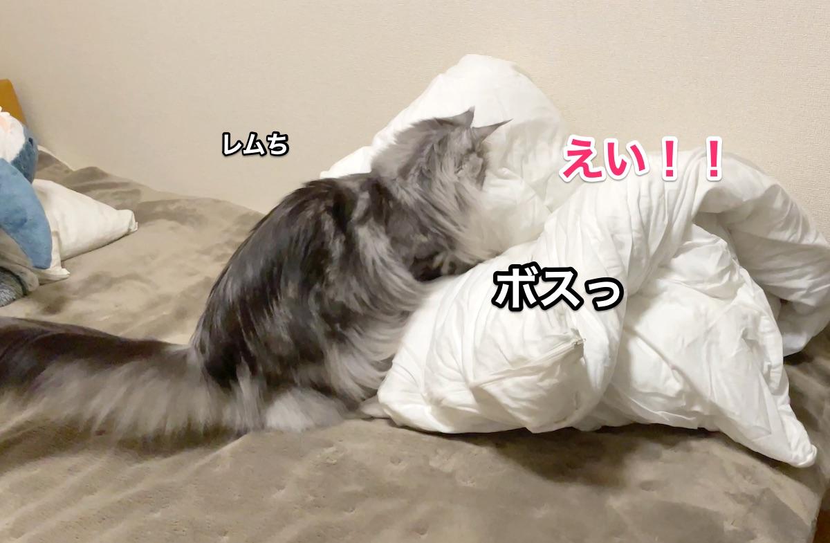 f:id:chikojirou:20201130212243j:plain