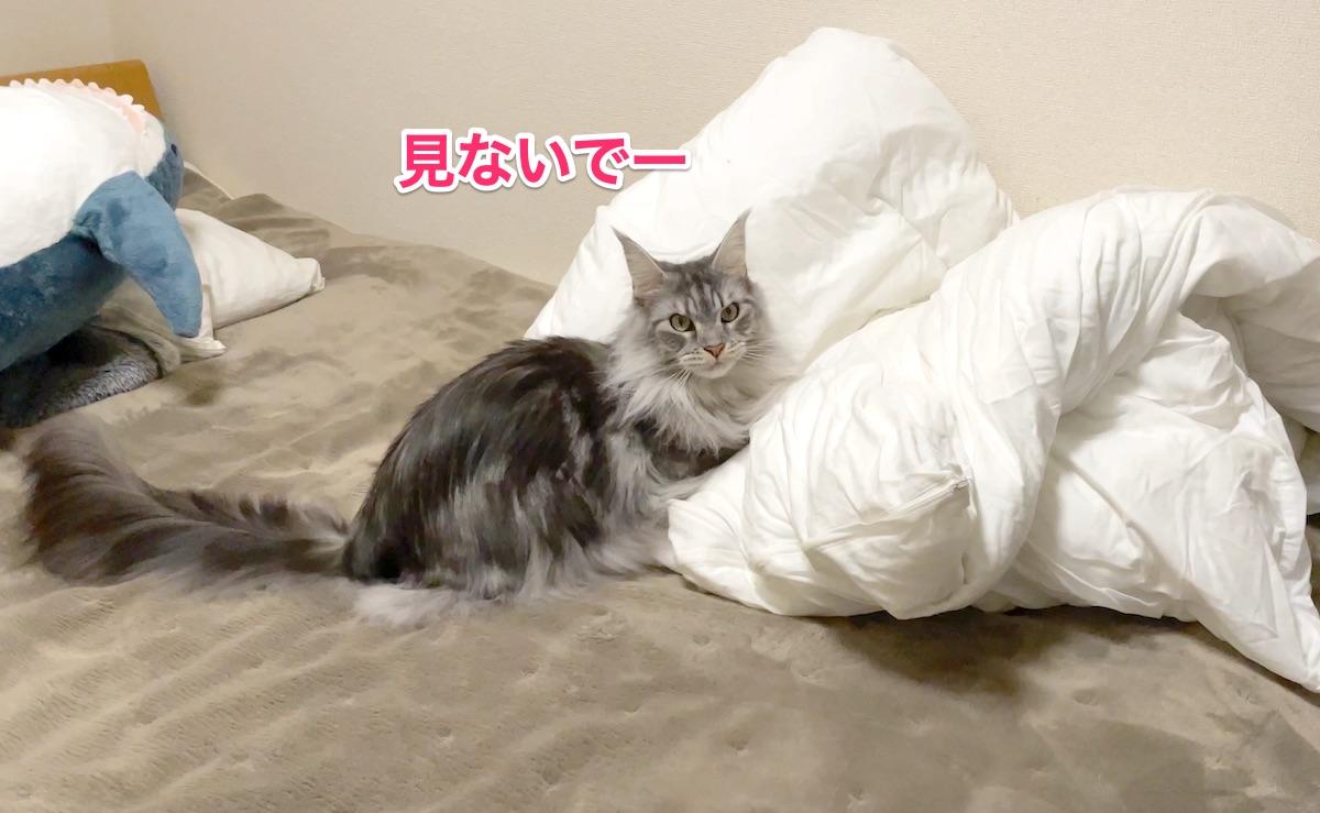 f:id:chikojirou:20201130212247j:plain