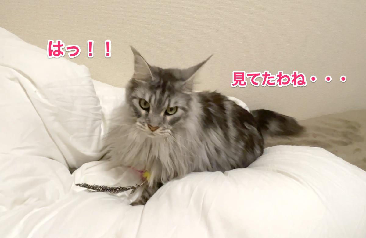 f:id:chikojirou:20201130212300j:plain