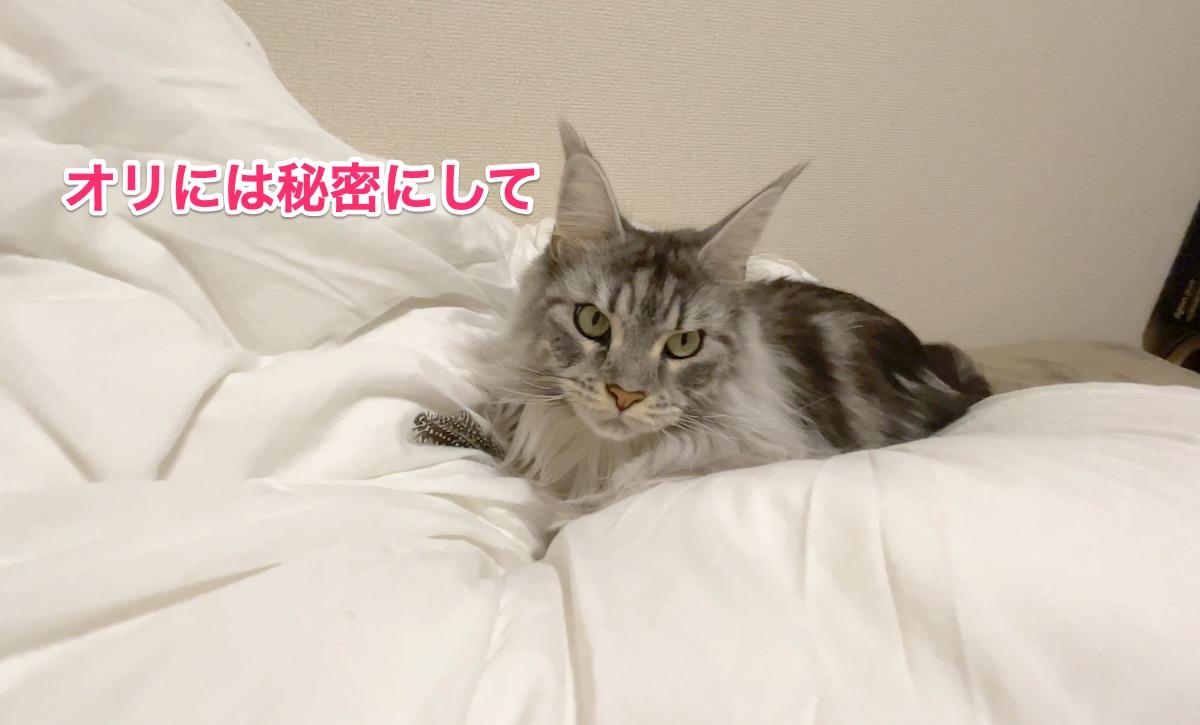 f:id:chikojirou:20201130212303j:plain