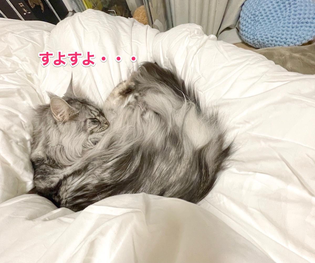 f:id:chikojirou:20201130212306j:plain
